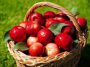 K uskladnění vybírejte jablka nejen očima, ale také čichem.