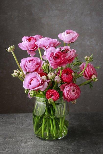 Ranunculus asiaticus je původem z Orientu.
