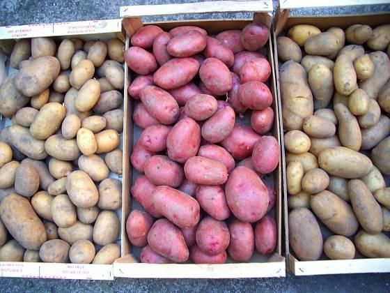 Kvalitní sadbové brambory