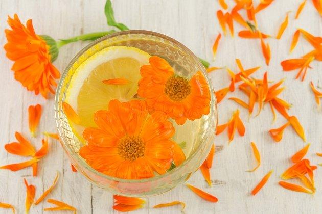 U měsíčku můžeme použít čerstvé i sušené květy