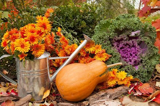 Oranžová dýně - typická ukázka podzimu na našich zahradách