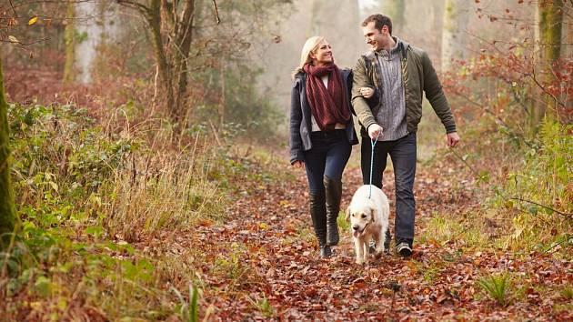 Procházka lesem je zdravým pohybem i relaxem zároveň
