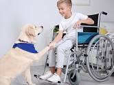 Nejen staří a osamocení lidé, ale i děti po úrazech velmi ocení návštěvu psích terapeutů v nemocnici.