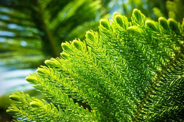 Na své si tu přijdou i botanici - k vidění je vzácná Wollemia nobilis.