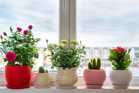 Slušivý obal na pokojové rostliny přijde vhod.