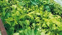 zelenině se na vysokém záhoně daří