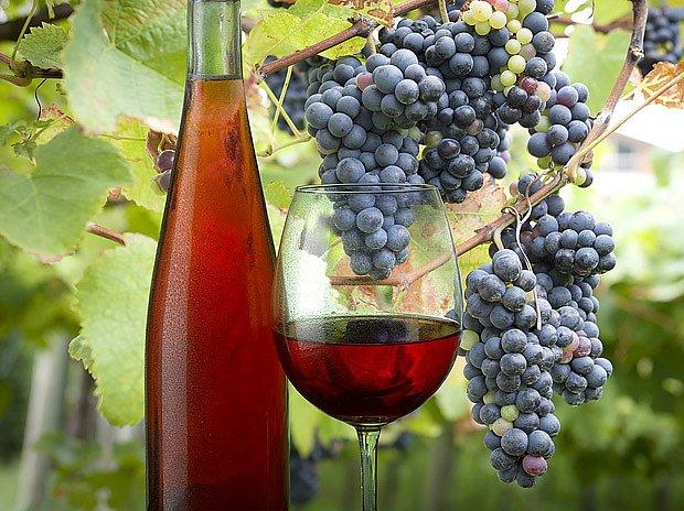 Růžové víno se vyrábí rychlým lisováním červených hroznů