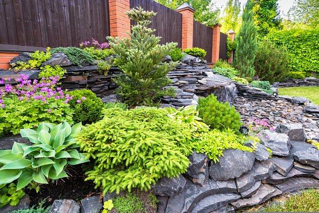 Při výběru volíme okrasné jehličnany do zahrady podle předpokládané výšky růstu.