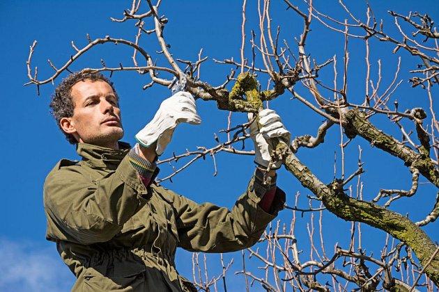 Řez ovocných stromů je náročná disciplína