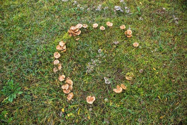 Velikost kruhu, ve kterém houby rostou, se postupně zvětšuje.