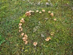 Jak odstranit houby z trávníku?