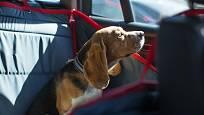 Jedním z praktických doplňků pro cestování se psem v autě je potah na zadní sedadla.