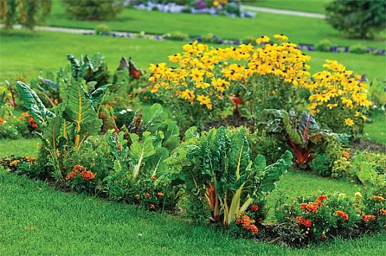 Kdo říká, že zelenina nemůže být pestrá? Řapíkový mangold září už z dálky.