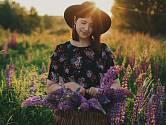 Vysijte vlčí bob, potěší květem a poslouží jako zelené hnojení.