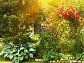 Kouzlo dávných dob dodají zahradě bohyšky, zvonky i pnoucí růže.