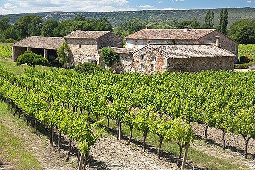 francouzská vinice v Provence