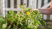 I plevel má na zahradě své místo a využití