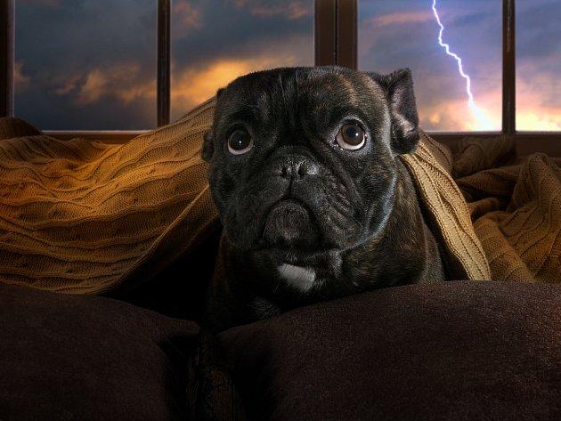 Na bouřku a silné změny počasí jsou psi velmi citliví.