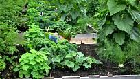 Vyvýšené zeleninové záhony jsou pohledné i praktické