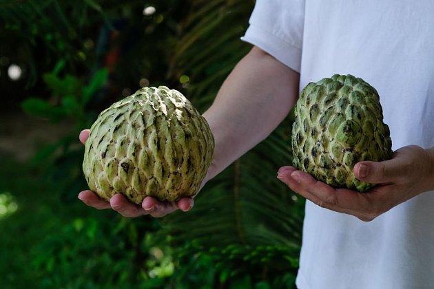 čerimoja, plod láhevníku
