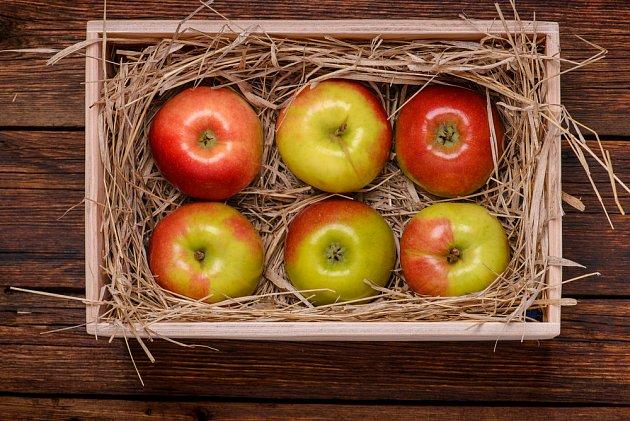 Jablka uskladněná v bedničce na slámě