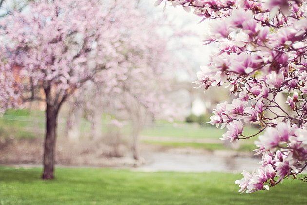 jezírko na jaře Home Pond
