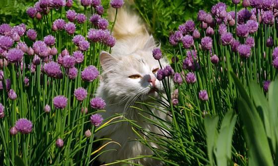 kočka a zahrada