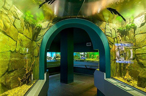 Podvodní tunel vede k akváriím