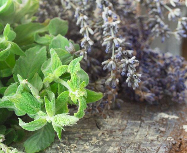 Na inkriminovaná stanoviště výskytu mravenců můžete postavit květníky s eukalyptem, bazalkou či levandulí.