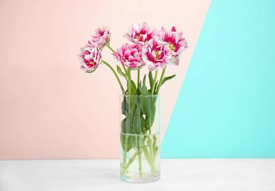 K dvoubarevným plnokvětým tulipánům už není třeba nic přidávat.