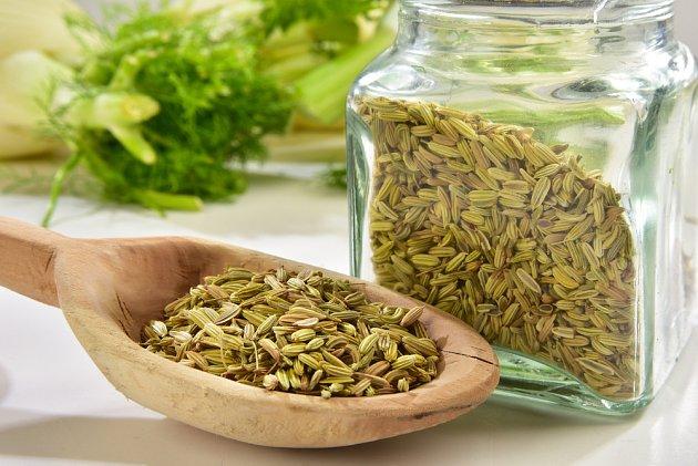Fenykl se hodí nejen do pečiva, ale i do bylinkového čaje