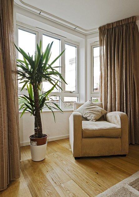 Velmi oblíbenými pokojovými rostlinami se zajímavým vzhledem jsou také juky.