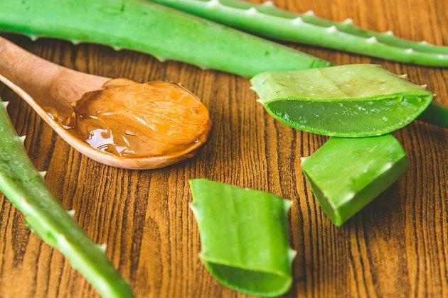 Aloe vera funguje jako přírodní stimulátor tvorby kořenů.