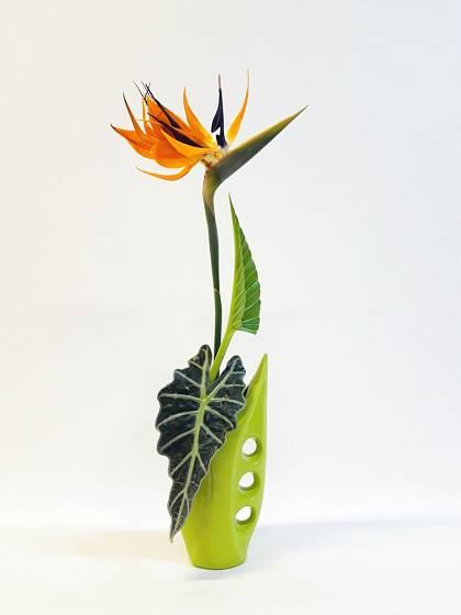Květ strelície můžeme využít i při tvorbě ikebany.