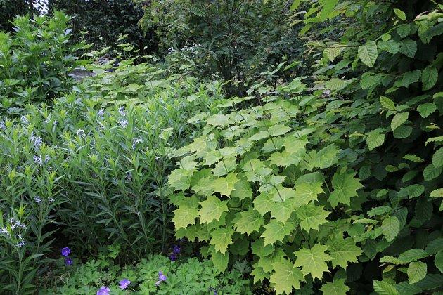 Bohatá zeleň ve stinné zahradě