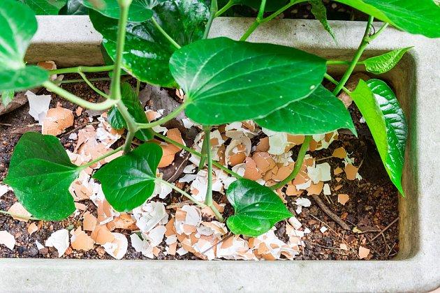 Dodají rostlinám živiny