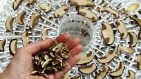 Sušením houby výrazně zmenší svůj objem.