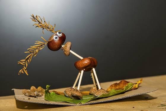 Kaštaňák 2019 - kaštany, číšky ze žaludů, větvičky