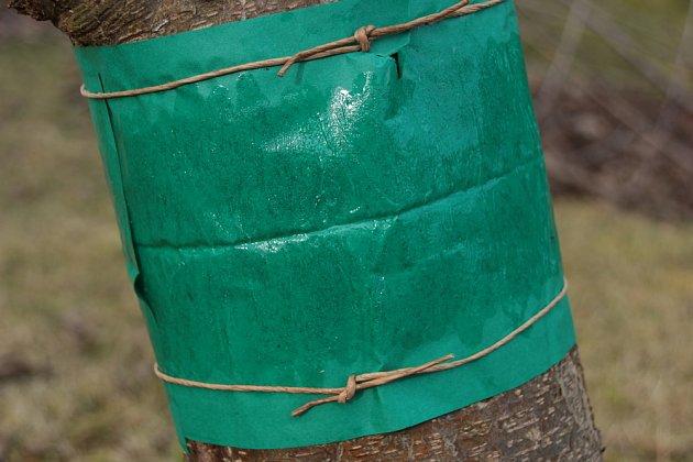 Lepový pás na obaleče chrání jabloně, třešně, meruňky i slívy