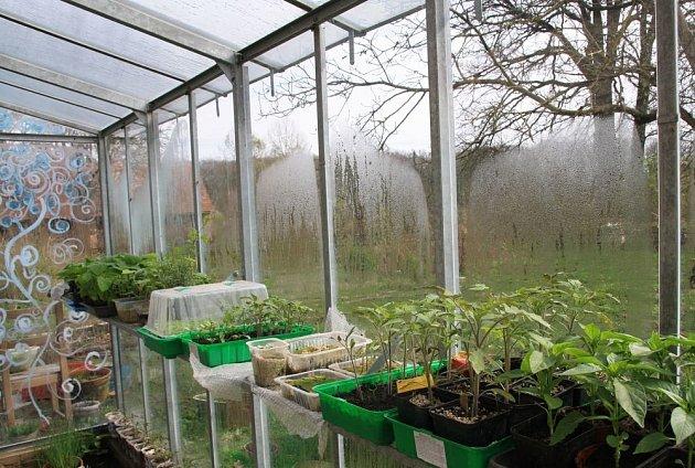 Sazenice přeneseme do skleníku, jak jen to počasí dovolí