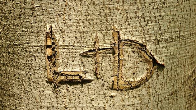 Iniciály vyryté do stromu jsou přetrvávajícím vandalismem.