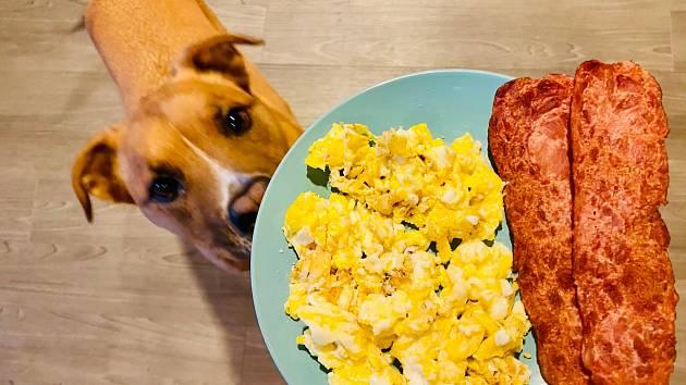 Lákají ho míchaná vejce, nebo spíš celá snídaně?