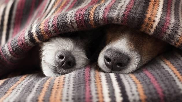 ee07a403d21 Jak se starat o psy v mraze  Kdy je obleček skutečně vhodný  - Psi a ...