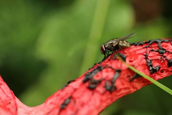 Zápach láká hmyz
