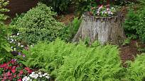 Stejné květiny v popředí i na pařezu pomáhají prostor sjednotit.