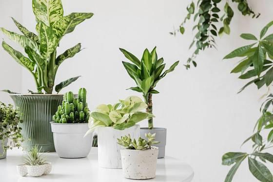 Pokojové rostliny nás budou těšit po celou zimu