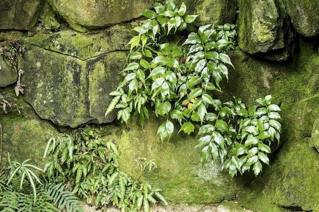 Mech někdy na zahradě škodí, zvláště na kamenech a zídkách.