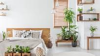 Bedýnky z masivu mohou plnit i funkci čistě dekorační.