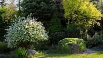 jehličnany tvoří pozadí pro ostatní rostliny