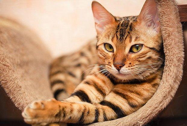 Pokud neplánujeme koťata, nechat kočku sterilizovat je zodpovědné